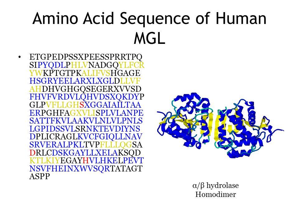 Amino Acid Sequence of Human MGL ETGPEDPSSXPEESSPRRTPQ SIPYQDLPHLVNADGQYLFCR YWKPTGTPKALIFVSHGAGE HSGRYEELARXLXGLDLLVF AHDHVGHGQSEGERXVVSD FHVFVRDVLQHVDSXQKDYP GLPVFLLGHSXGGAIAILTAA ERPGHFAGXVLISPLVLANPE SATTFKVLAAKVLNLVLPNLS LGPIDSSVLSRNKTEVDIYNS DPLICRAGLKVCFGIQLLNAV SRVERALPKLTVPFLLLQGSA DRLCDSKGAYLLXELAKSQD KTLKIYEGAYHVLHKELPEVT NSVFHEINXWVSQRTATAGT ASPP α/β hydrolase Homodimer