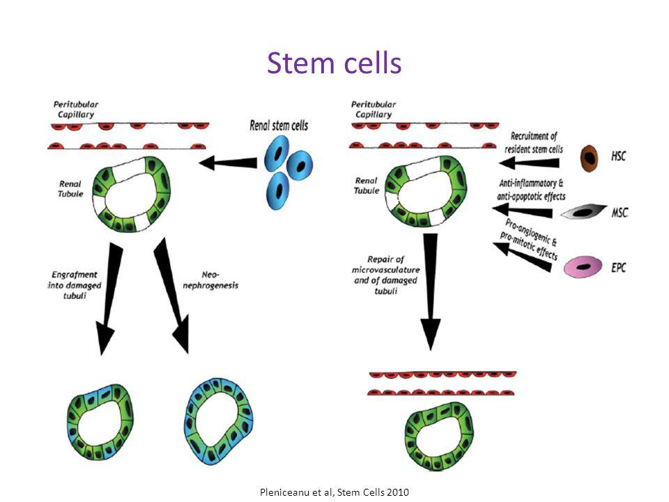 Stem cells Pleniceanu et al, Stem Cells 2010