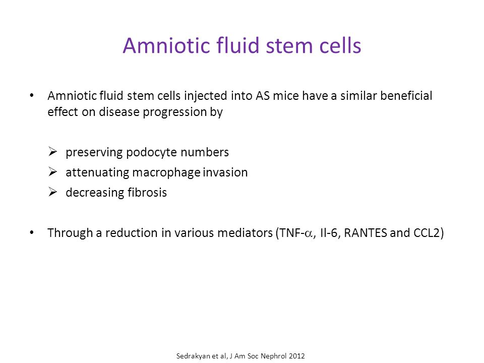 Amniotic fluid stem cells Amniotic fluid stem cells injected into AS mice have a similar beneficial effect on disease progression by  preserving podocyte numbers  attenuating macrophage invasion  decreasing fibrosis Through a reduction in various mediators (TNF- , Il-6, RANTES and CCL2) Sedrakyan et al, J Am Soc Nephrol 2012