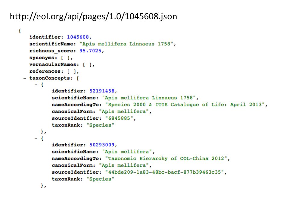 http://eol.org/api/pages/1.0/1045608.json