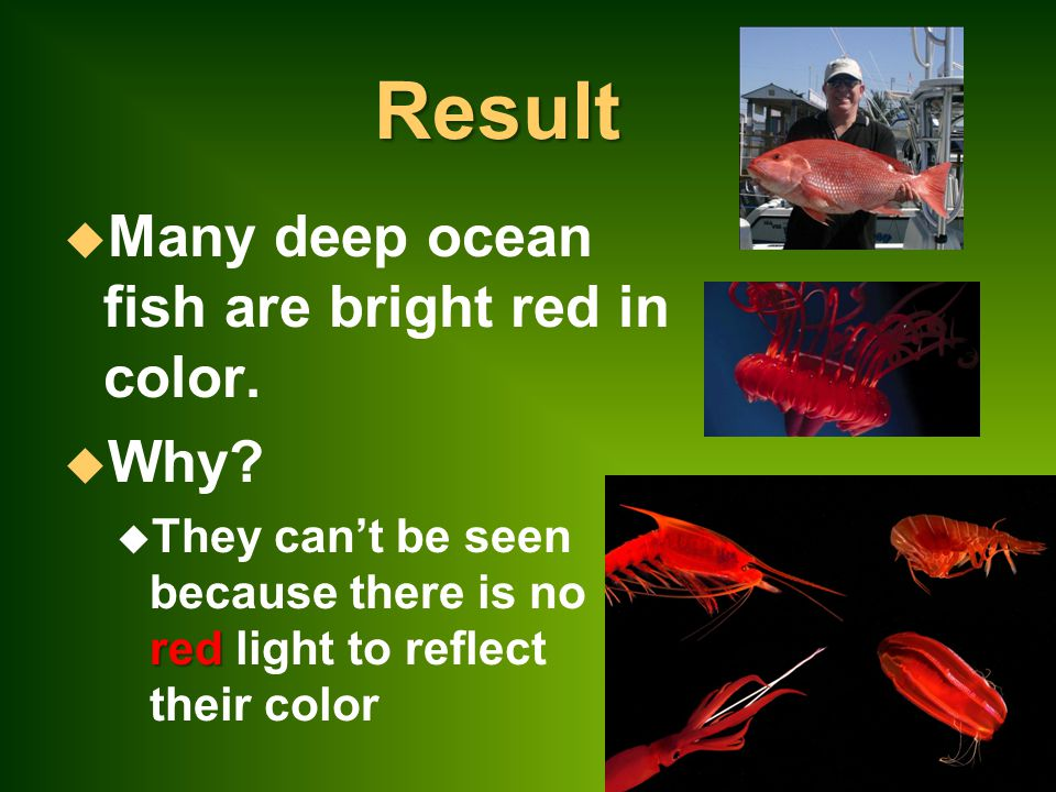 Result u Many deep ocean fish are bright red in color.