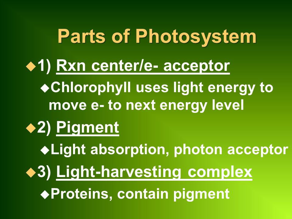 Parts of Photosystem u 1) Rxn center/e- acceptor u Chlorophyll uses light energy to move e- to next energy level u 2) Pigment u Light absorption, photon acceptor u 3) Light-harvesting complex u Proteins, contain pigment