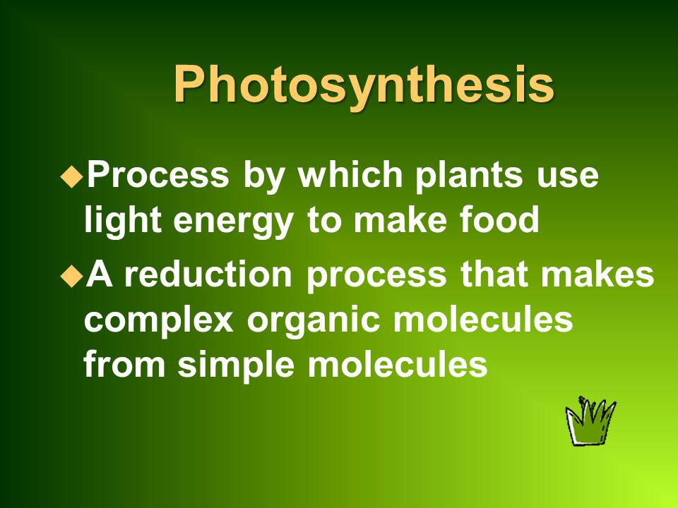Photosynthesis u Process by which plants use light energy to make food u A reduction process that makes complex organic molecules from simple molecules