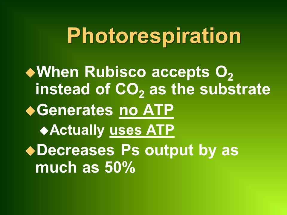 Photorespiration u When Rubisco accepts O 2 instead of CO 2 as the substrate u Generates no ATP u Actually uses ATP u Decreases Ps output by as much as 50%