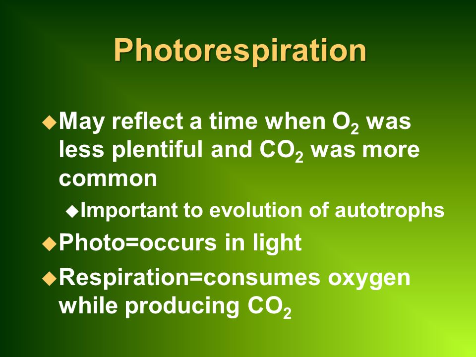 Photorespiration u May reflect a time when O 2 was less plentiful and CO 2 was more common u Important to evolution of autotrophs u Photo=occurs in light u Respiration=consumes oxygen while producing CO 2