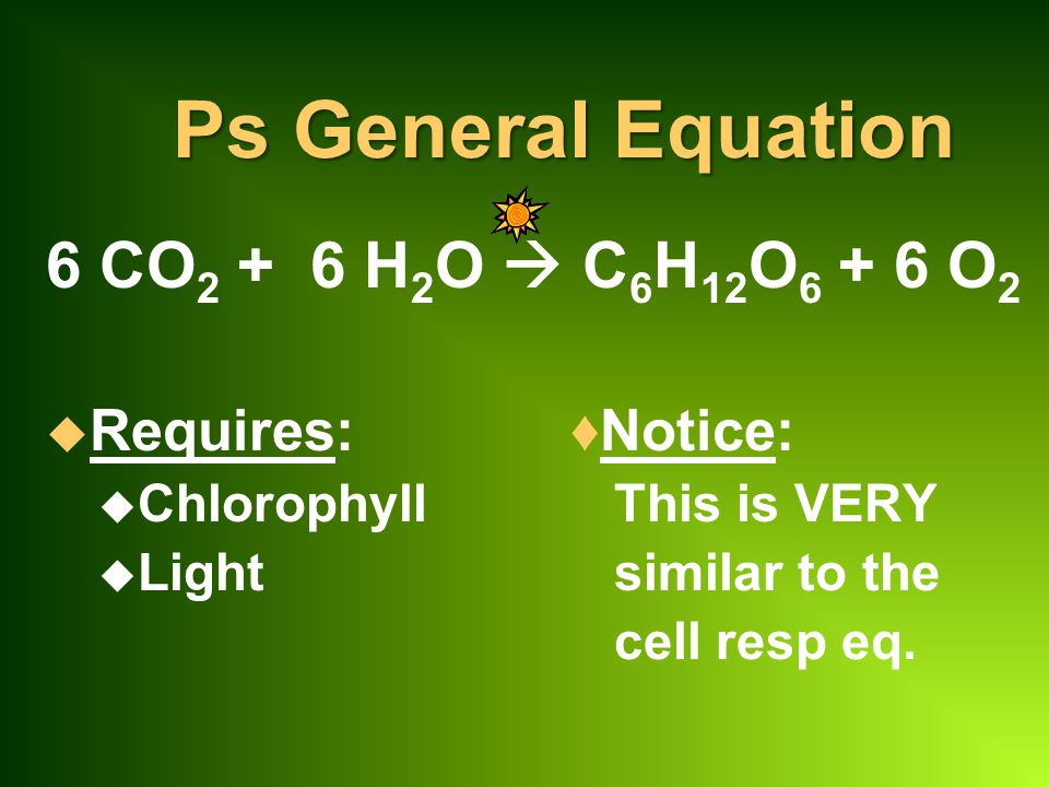 Ps General Equation 6 CO 2 + 6 H 2 O  C 6 H 12 O 6 + 6 O 2 u Requires:♦Notice: u Chlorophyll This is VERY u Light similar to the cell resp eq.