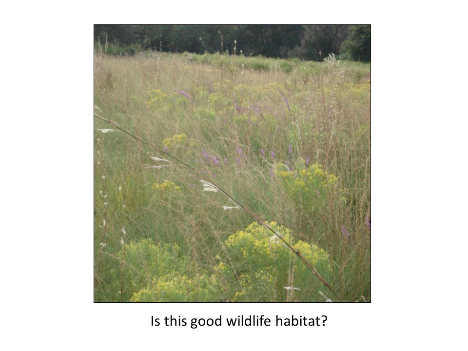 Is this good wildlife habitat