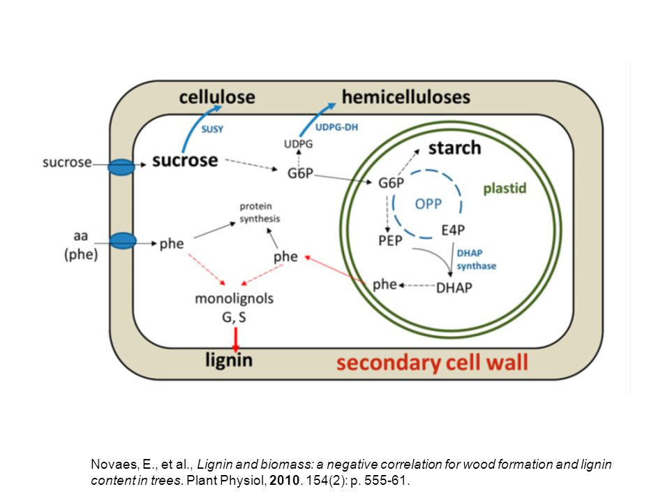 Elimination of flavonoids from HCT-RNAi plants does not rescue their growth phenotype (Figure 5.