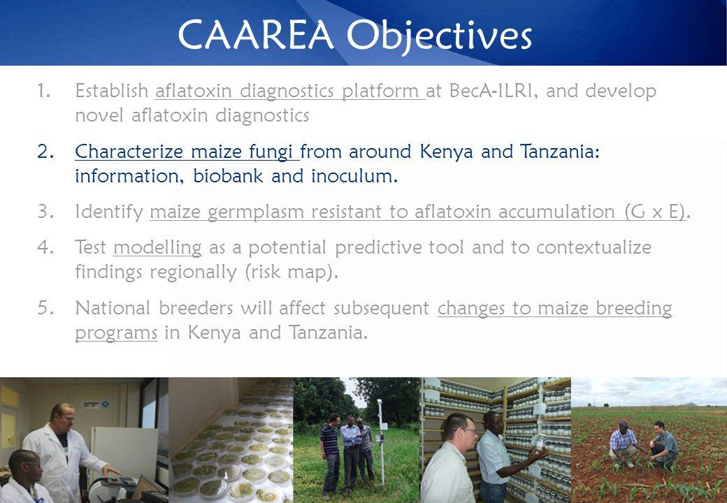 CAAREA Objectives 1.Establish aflatoxin diagnostics platform at BecA-ILRI, and develop novel aflatoxin diagnostics 2.Characterize maize fungi from around Kenya and Tanzania: information, biobank and inoculum.
