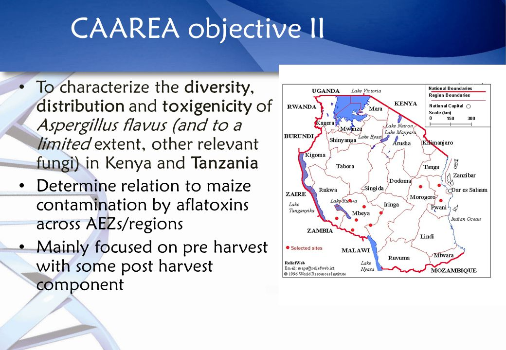 CAAREA objective II To characterize the diversity, distribution and toxigenicity of Aspergillus flavus (and to a limited extent, other relevant fungi) in Kenya and Tanzania Determine relation to maize contamination by aflatoxins across AEZs/regions Mainly focused on pre harvest with some post harvest component