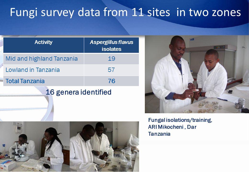 Fungi survey data from 11 sites in two zones ActivityAspergillus flavus isolates Mid and highland Tanzania19 Lowland in Tanzania57 Total Tanzania76 16 genera identified Fungal isolations/training, ARI Mikocheni, Dar Tanzania