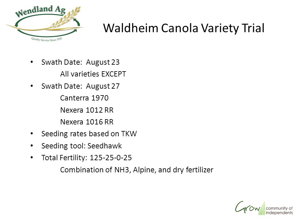 Waldheim Glyphosate Timing Trial Results are the average of 3 reps All treatments, including check, received pre-seed burn-off of ¾ rate glyphosate Note: weed pressure was very low throughout the whole field No other herbicide applications were made Each treatment was replicated 3 times, each time using a different salt formulation of glyphosate