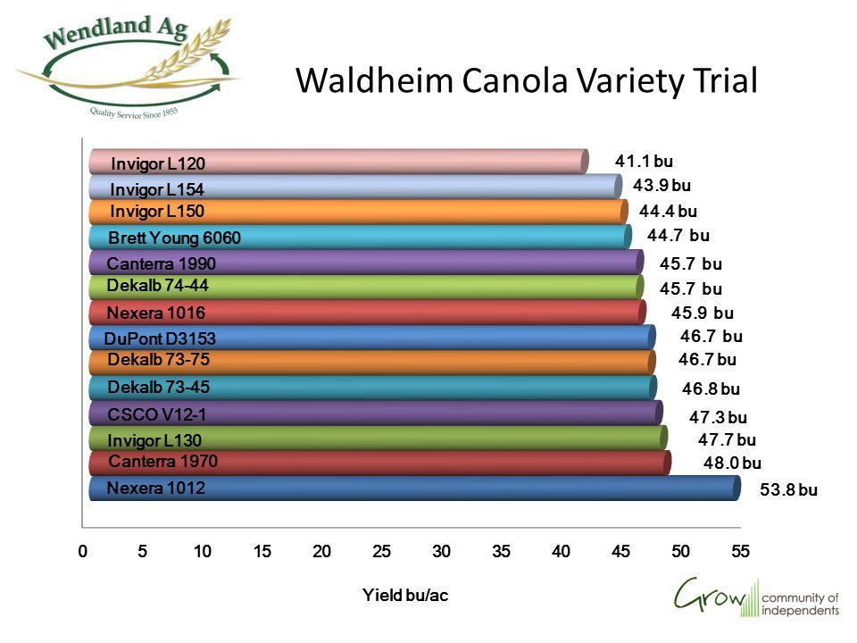 Waldheim Canola Variety Trial Yield bu/ac 41.1 bu 43.9 bu 44.4 bu 44.7 bu 45.7 bu 45.9 bu 46.7 bu 46.8 bu 47.3 bu 47.7 bu 48.0 bu 53.8 bu