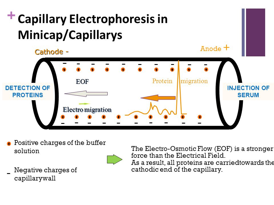 + Anode + Cathode - EOF Electro migration Protein migration The Electro-Osmotic Flow (EOF) is a stronger force than the Electrical Field. As a result,