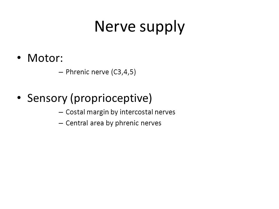 Nerve supply Motor: – Phrenic nerve (C3,4,5) Sensory (proprioceptive) – Costal margin by intercostal nerves – Central area by phrenic nerves