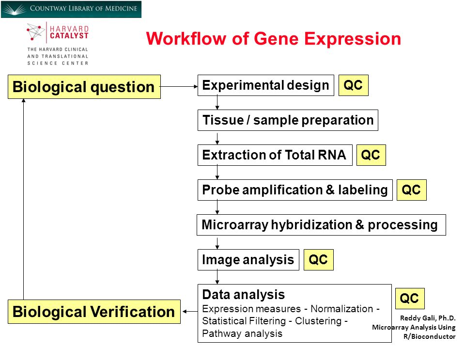Workflow of Gene Expression Reddy Gali, Ph.D.