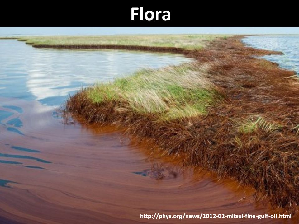 http://phys.org/news/2012-02-mitsui-fine-gulf-oil.html Flora
