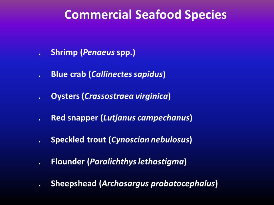 Commercial Seafood Species. Shrimp (Penaeus spp.).