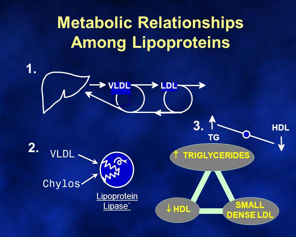 Metabolic Relationships Among Lipoproteins LDL 1. 3.