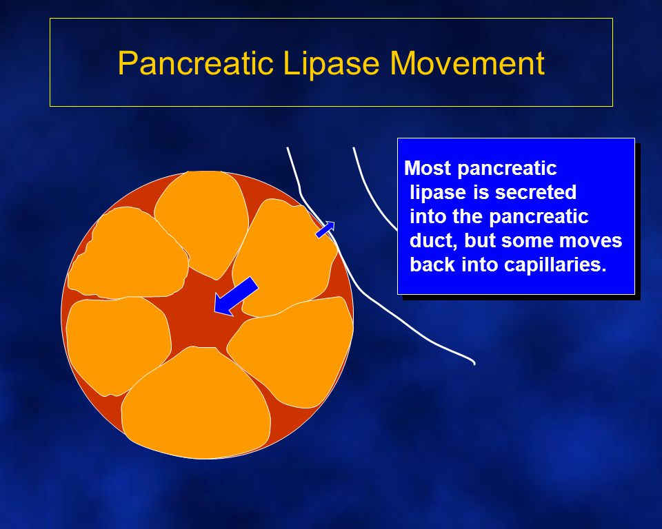 Pancreatic Lipase Movement Most pancreatic lipase is secreted into the pancreatic duct, but some moves back into capillaries.