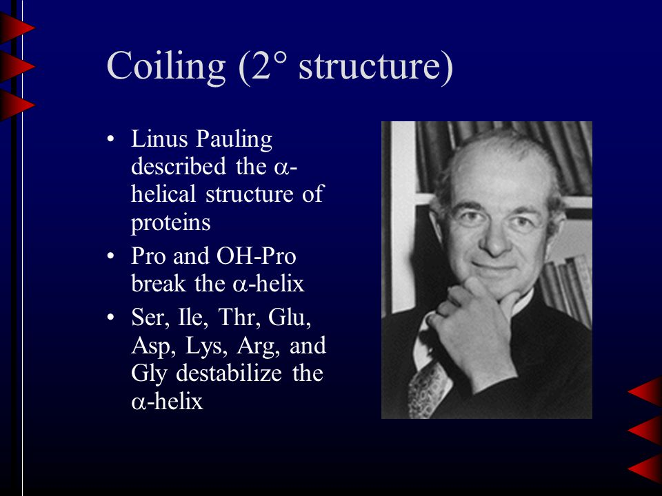Coiling (2  structure) Linus Pauling described the  - helical structure of proteins Pro and OH-Pro break the  -helix Ser, Ile, Thr, Glu, Asp, Lys, Arg, and Gly destabilize the  -helix