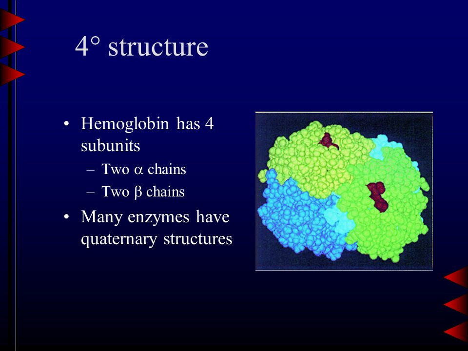 4  structure Hemoglobin has 4 subunits –Two  chains –Two  chains Many enzymes have quaternary structures