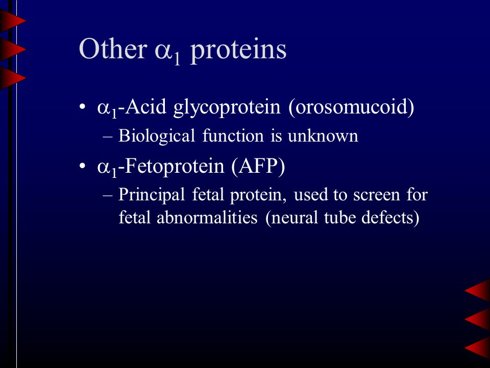 Other  1 proteins  1 -Acid glycoprotein (orosomucoid) –Biological function is unknown  1 -Fetoprotein (AFP) –Principal fetal protein, used to screen for fetal abnormalities (neural tube defects)