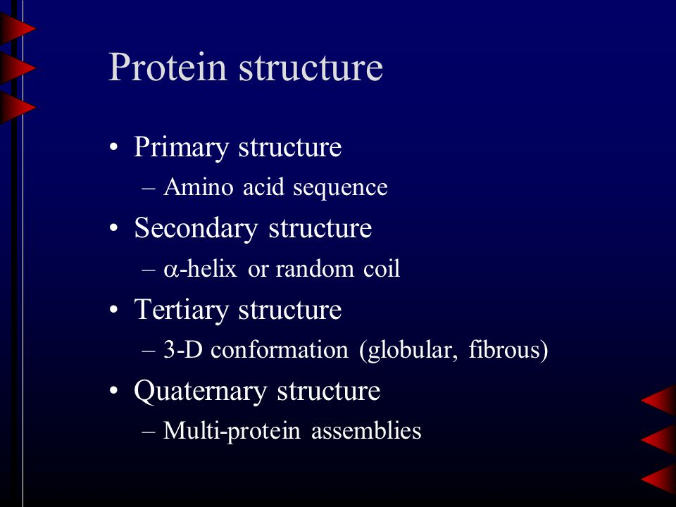Protein structure Primary structure –Amino acid sequence Secondary structure –  -helix or random coil Tertiary structure –3-D conformation (globular, fibrous) Quaternary structure –Multi-protein assemblies