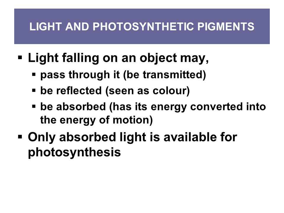 LIGHT AND PHOTOSYNTHETIC PIGMENTS  Light falling on an object may,  pass through it (be transmitted)  be reflected (seen as colour)  be absorbed (