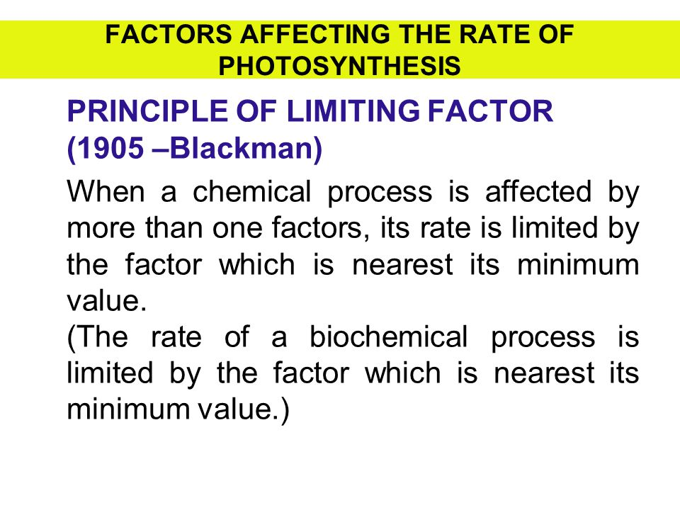 FACTORS AFFECTING THE RATE OF PHOTOSYNTHESIS PRINCIPLE OF LIMITING FACTOR (1905 –Blackman) When a chemical process is affected by more than one factor