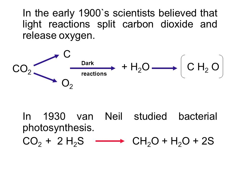 In bacterial photosynthesis:  Oxygen is not released  This proves that light does not split carbondioxide in plantphotosynthesis.