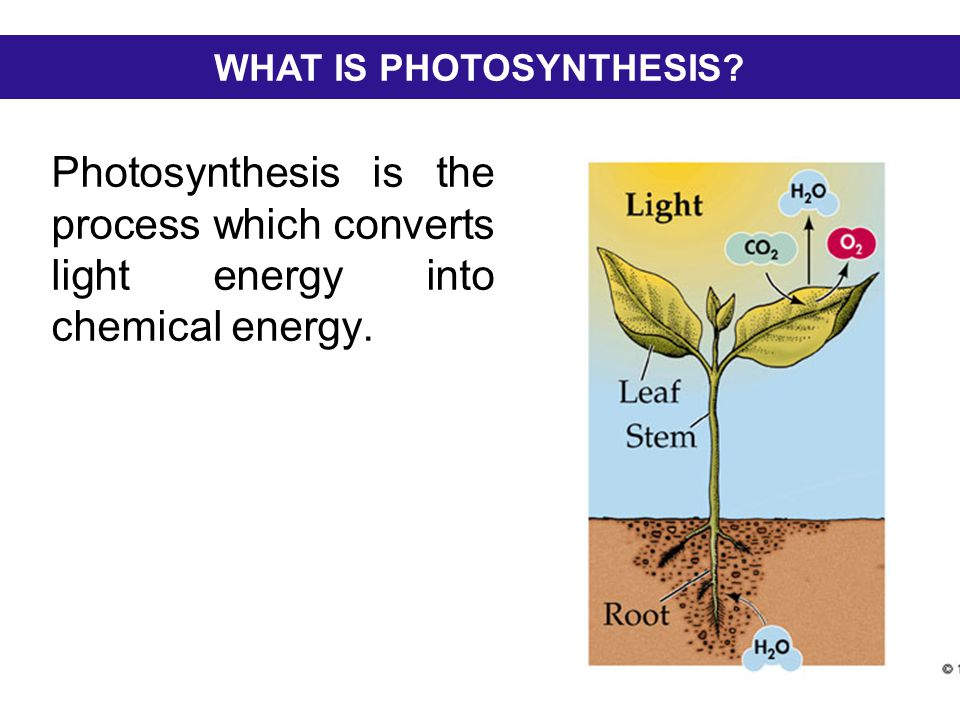 Photosynthesis is the process which converts light energy into chemical energy. WHAT IS PHOTOSYNTHESIS?