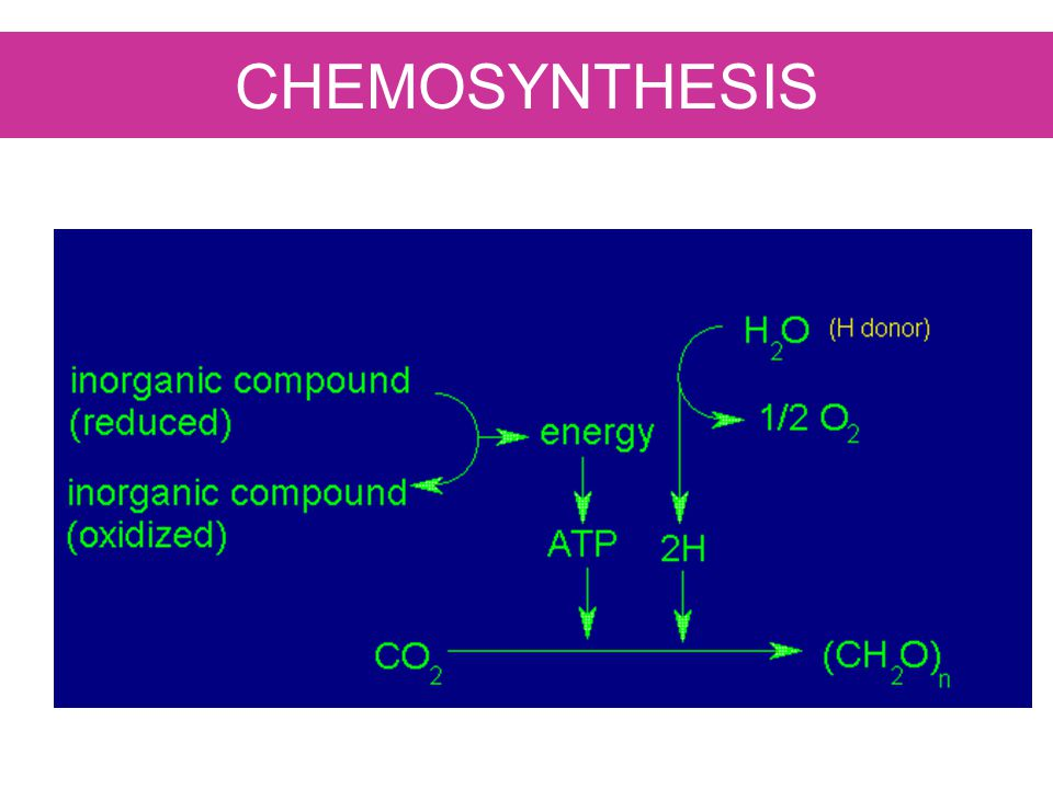 CHEMOSYNTHESIS