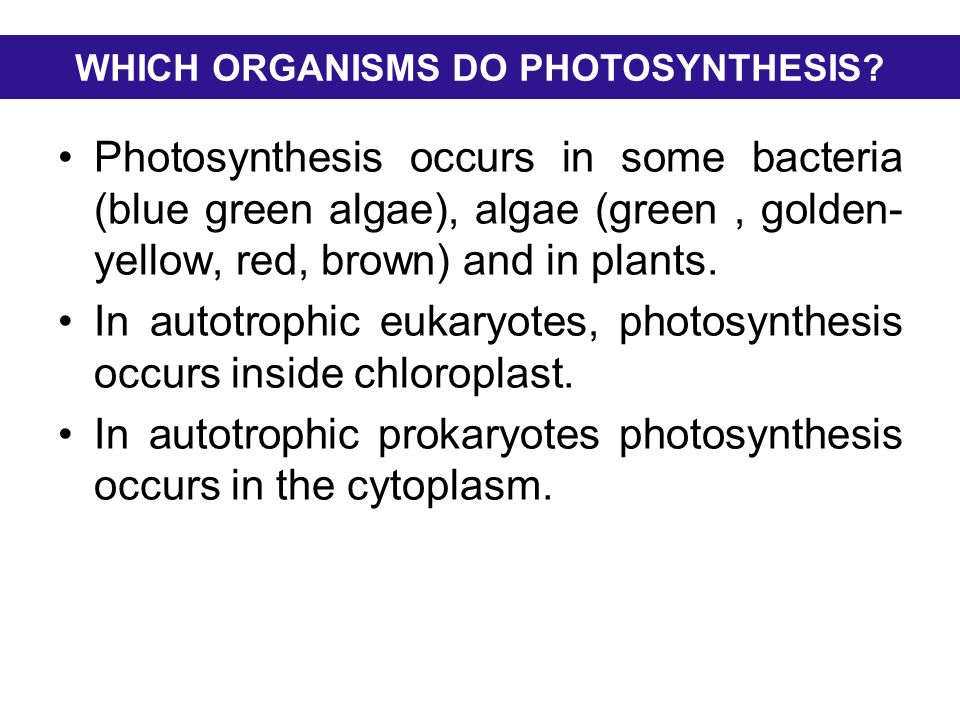 LIGHT AND PHOTOSYNTHETIC PIGMENTS  Light falling on an object may,  pass through it (be transmitted)  be reflected (seen as colour)  be absorbed (has its energy converted into the energy of motion)  Only absorbed light is available for photosynthesis