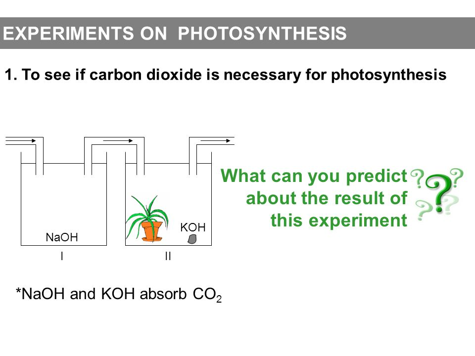 EXPERIMENTS ON PHOTOSYNTHESIS 1. To see if carbon dioxide is necessary for photosynthesis NaOH KOH III *NaOH and KOH absorb CO 2 What can you predict