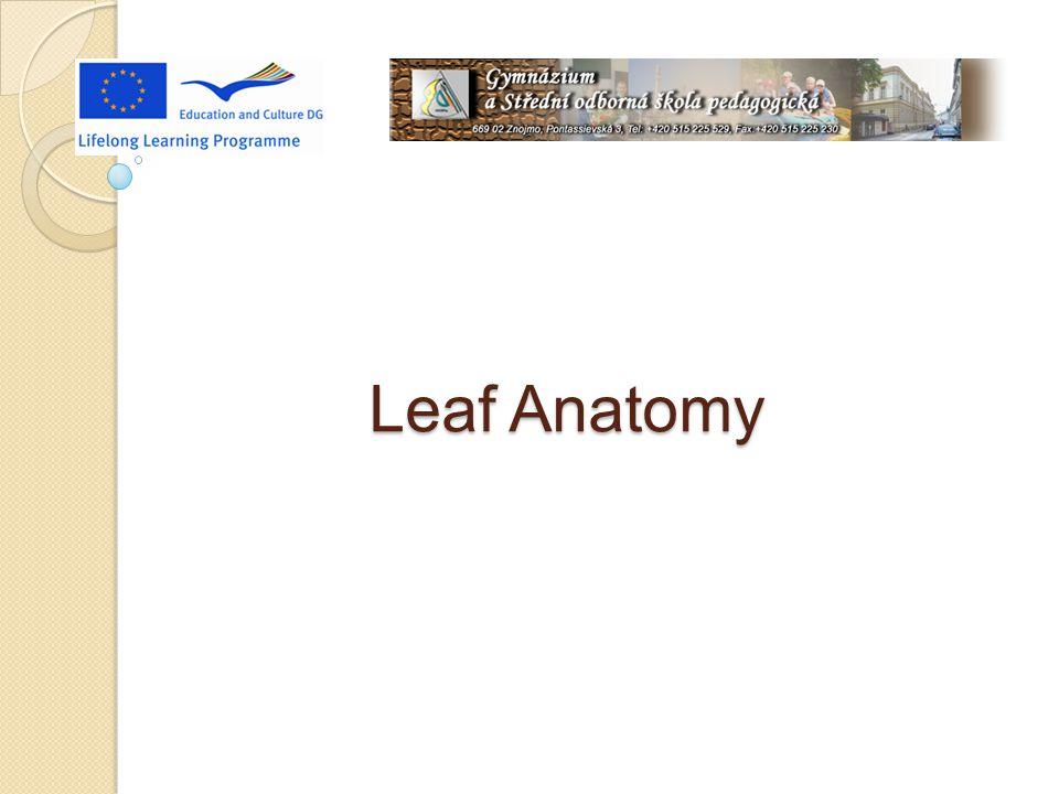 Resources Internet: http://www.ueb.cas.cz/laboratory_of_pollen_biology/pdf_subo r/anatomie_list.pdf http://cs.wikipedia.org/wiki/List#Anatomick.C3.A1_stavba_lis tu http://botany.upol.cz/atlasy/anatomie/anatomieCR28.pdf commons.wikimedia.org http://www.uri.edu/cels/bio/plant_anatomy/ www.sci.muni.cz/~anatomy/leaves/html/papyrus_1.htm