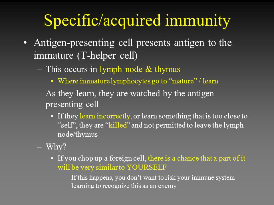 Specific/acquired immunity Antigen-presenting cell presents antigen to the immature (T-helper cell) –This occurs in lymph node & thymus Where immature