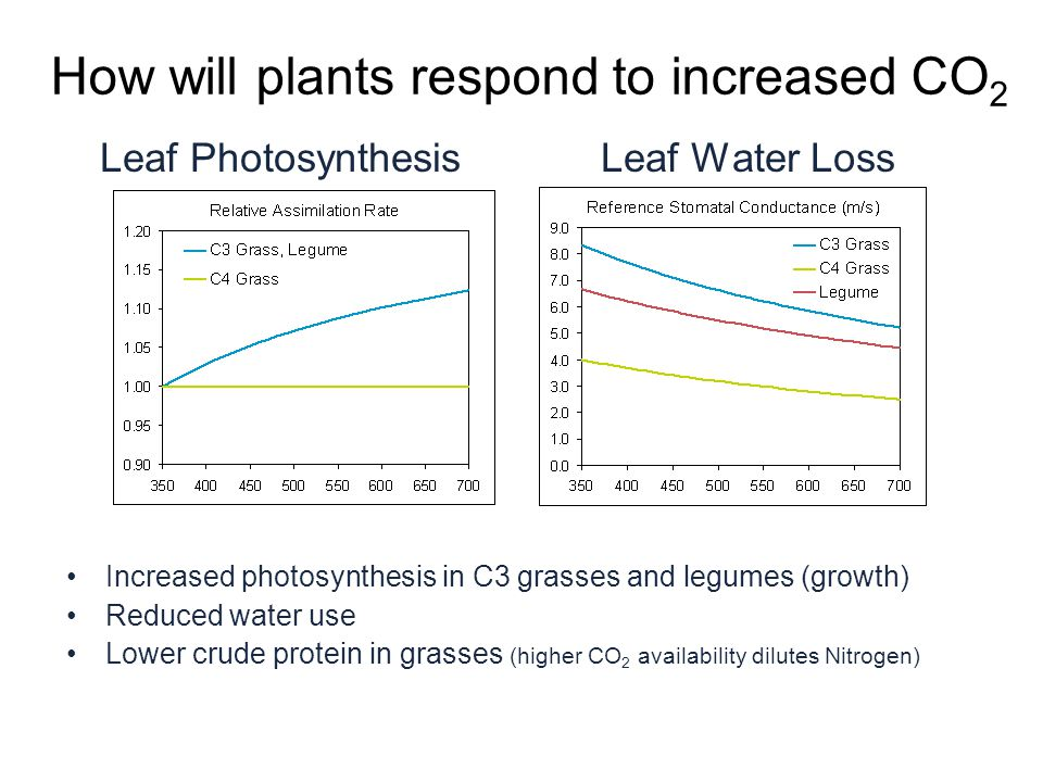 How will plants respond to increased CO 2 Leaf Photosynthesis Leaf Water Loss Increased photosynthesis in C3 grasses and legumes (growth) Reduced water use Lower crude protein in grasses (higher CO 2 availability dilutes Nitrogen)