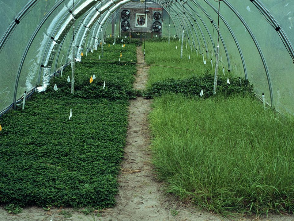 Materials and Methods-4 Herbage was harvested four times each year (Boote et al., 1999; Fritschi et al., 1999a, 1999b; Newman et al., 2001, 2005).