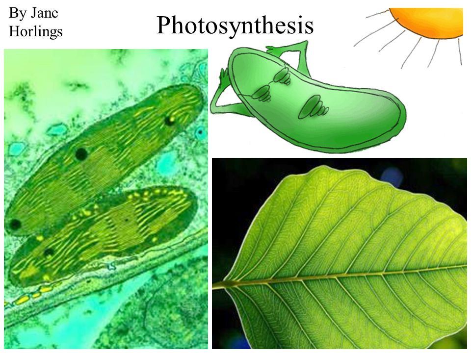 Photosynthesis By Jane Horlings