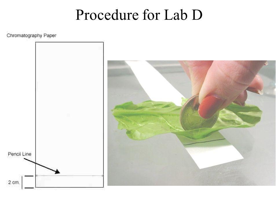 Procedure for Lab D