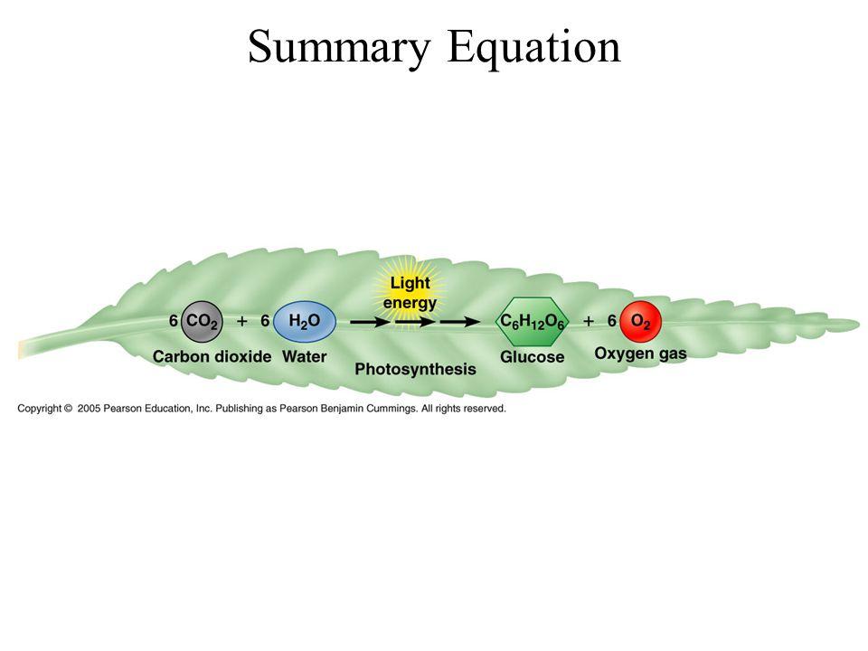 Summary Equation