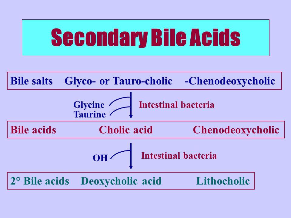 Secondary Bile Acids Bile salts Glyco- or Tauro-cholic -Chenodeoxycholic Bile acids Cholic acid Chenodeoxycholic 2° Bile acids Deoxycholic acid Lithocholic Intestinal bacteria Glycine Taurine OH