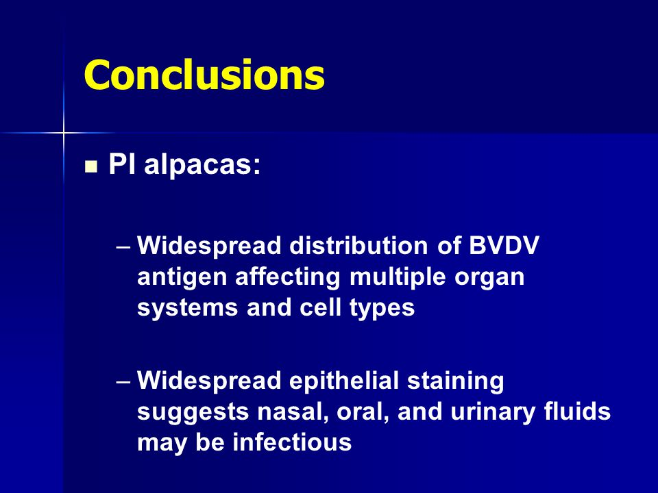 Conclusions PI alpacas: – –Widespread distribution of BVDV antigen affecting multiple organ systems and cell types – –Widespread epithelial staining s