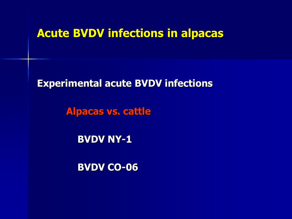 Acute BVDV infections in alpacas Experimental acute BVDV infections Alpacas vs. cattle BVDV NY-1 BVDV NY-1 BVDV CO-06 BVDV CO-06
