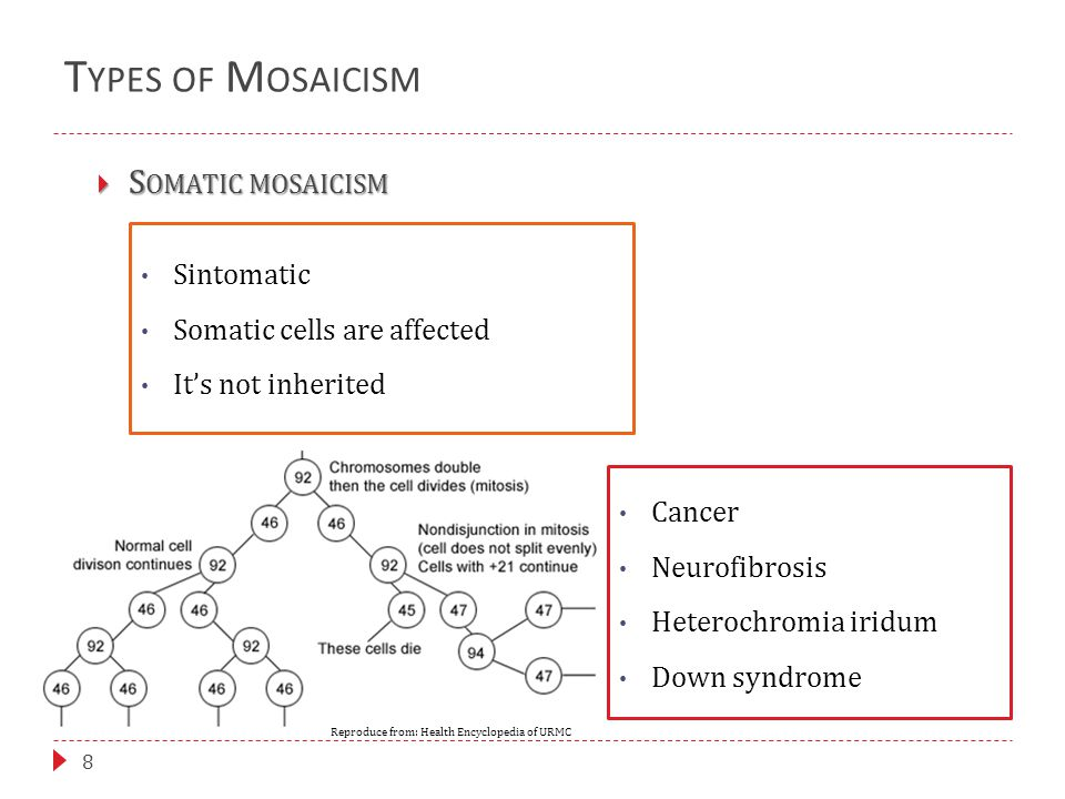 T YPES OF M OSAICISM 8  S OMATIC MOSAICISM Sintomatic Somatic cells are affected It's not inherited Cancer Neurofibrosis Heterochromia iridum Down sy