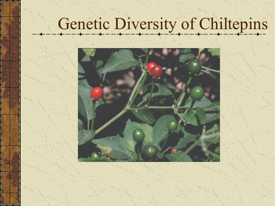 Genetic Diversity of Chiltepins
