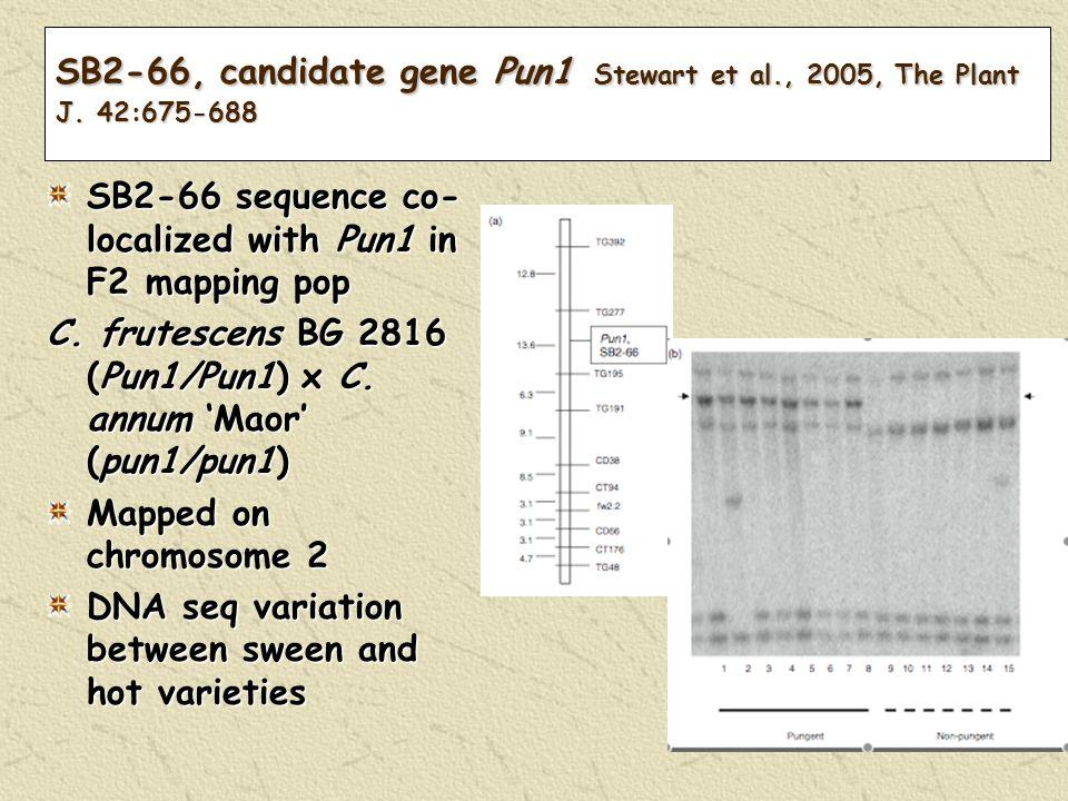 SB2-66, candidate gene Pun1 Stewart et al., 2005, The Plant J.