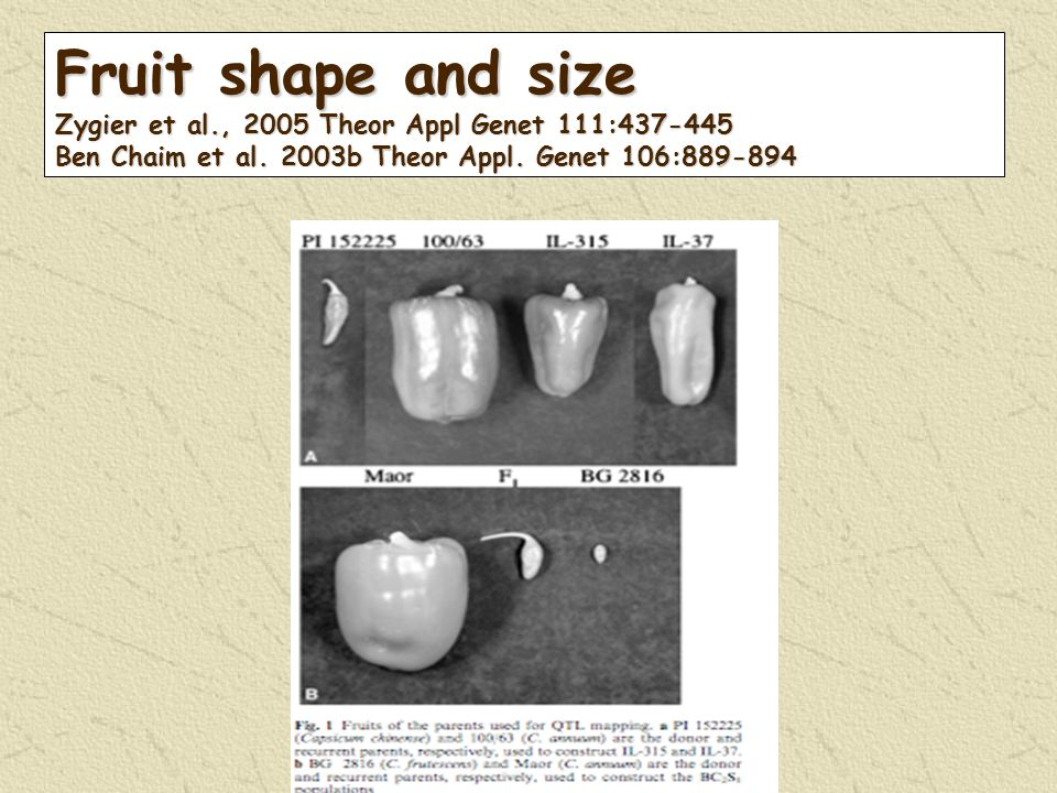 Fruit shape and size Zygier et al., 2005 Theor Appl Genet 111:437-445 Ben Chaim et al.