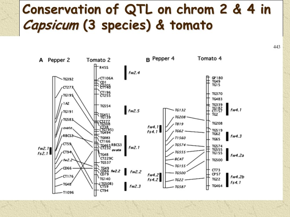 Conservation of QTL on chrom 2 & 4 in Capsicum (3 species) & tomato
